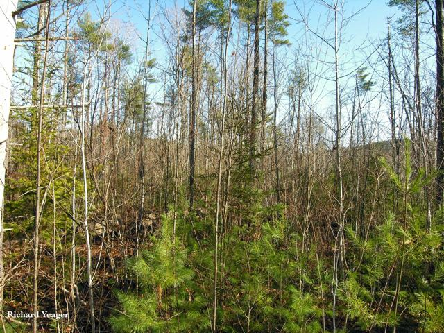 80 Acres of Land For Sale in Lewis, NY 12950